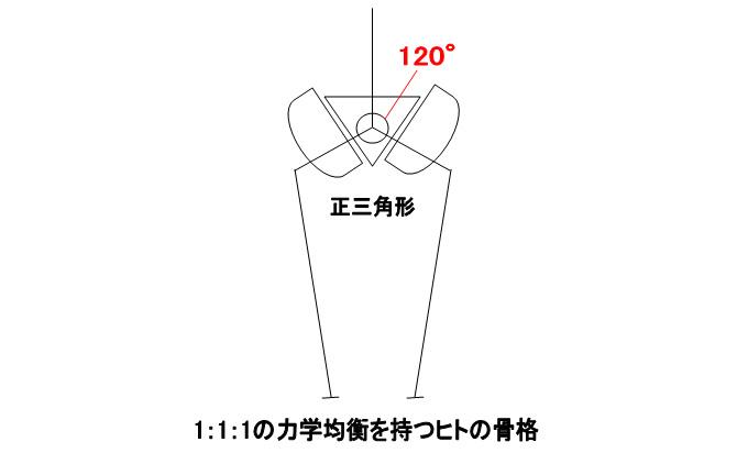 1:1:1の力学的均衡を持つヒトの骨格