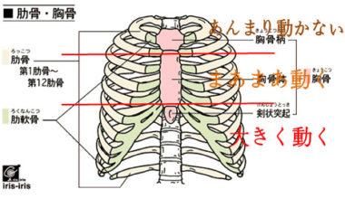 ブラジャーの締めつけは呼吸障害を起こす