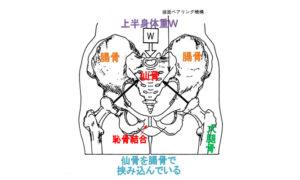 仙骨を腸骨で挟み込んでいる